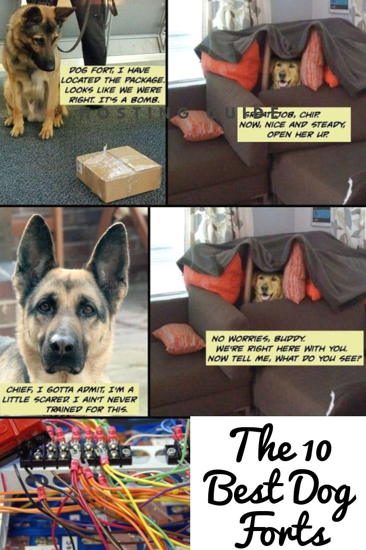 The 10 Best Dog Forts Dog Fort Best Dogs Dogs