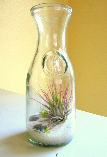 The Water Jug/Air Plant Terrarium: This is a more traditional terrarium except that it was made using our favorite water pitcher (at least it's what we use as a water pitcher) and sand and what looks to be an airplant. This is the definition of a low maintenance terrarium that's still lovely and charming.