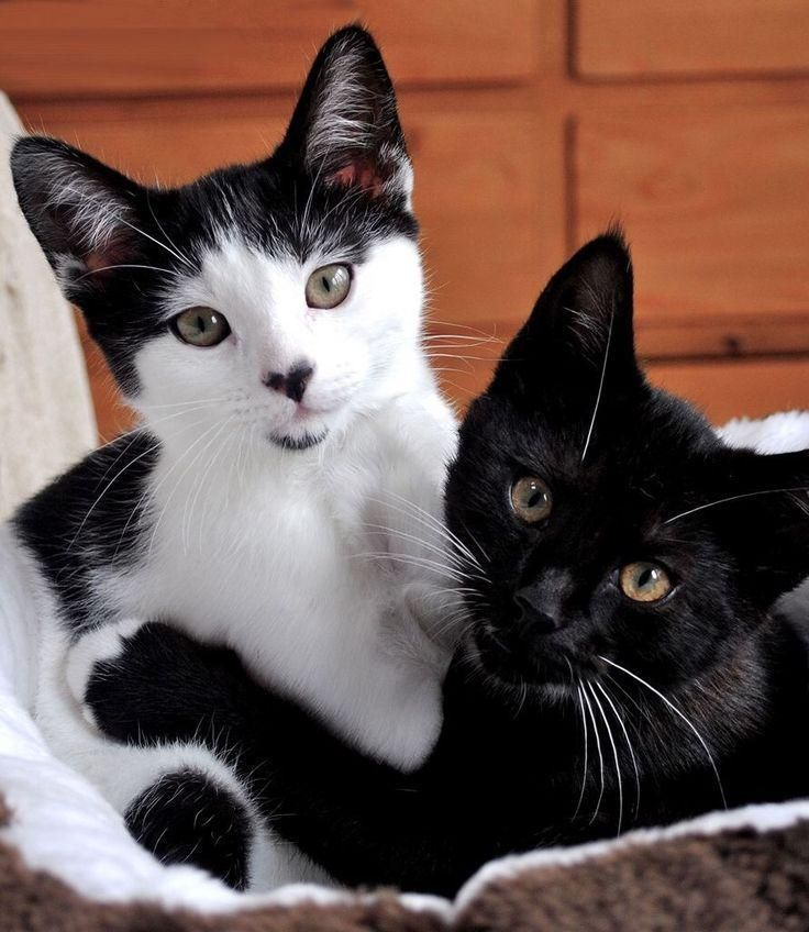 Here's a pair of sweeties! Love the heart nose and gautie on the tuxedo kitty.