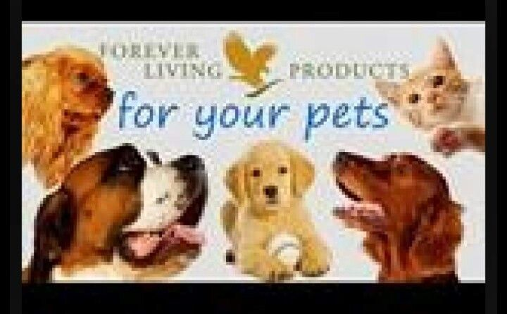 Your pet love aloe too x