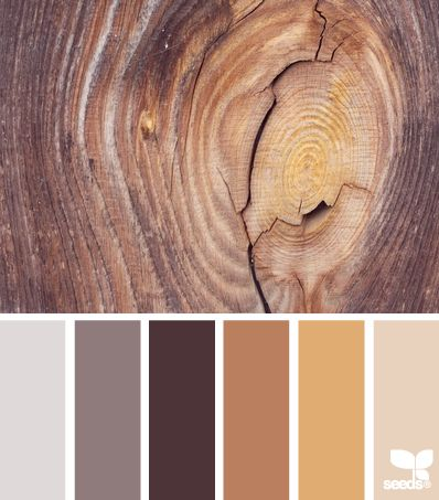 Grey/taupe, Brown, tan, honey, chocolate pallet similar to animal print, neutral colors. could accent with a terracotta orange