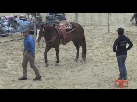 "▶ ""Sterling "" Monty Roberts Willing Partner Demo Berlin Germany May 2013 - YouTube"