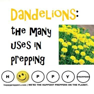 Dandelions are not a useless weed! Learn to respect the humble dandelion in prepping: http://happypreppers.com/dandelion.html