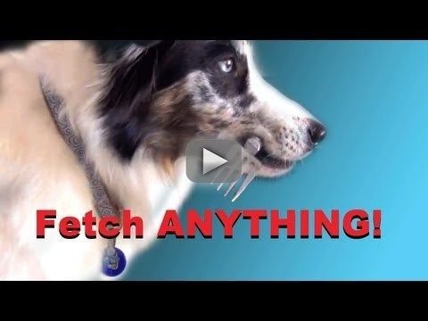 teach your dog how to stop with a clicker