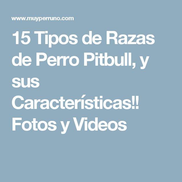 15 Tipos de Razas de Perro Pitbull, y sus Características!! Fotos y Videos