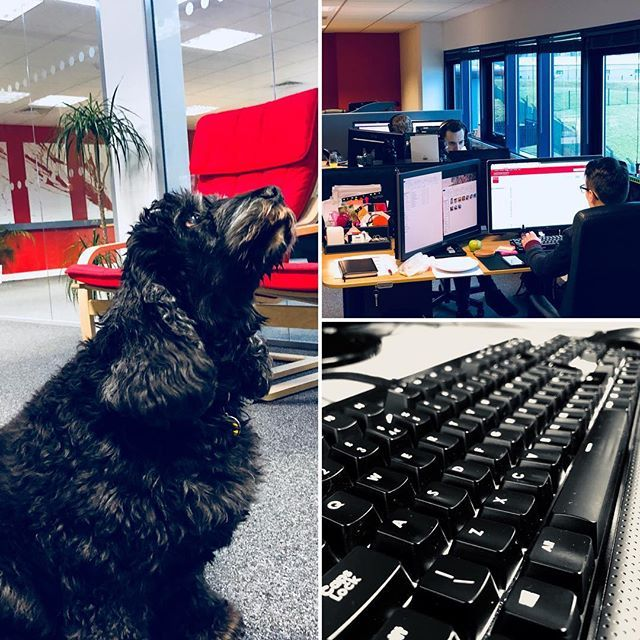 After a fantastic month of new projects its straight into a busy week. Plus weve got a special visitor for the day - Dan and Paiges dog Bonnie :) #officepet #busyweek #webdesign #staffordshire #dog #doglife