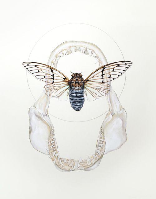 Thomas Jackson Illustratioin Artwork Cicada Shark Jaw Water Colour Gouache