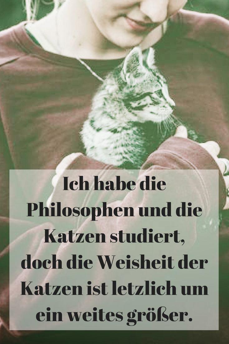 Ich habe die Philosophen und die Katzen studiert, doch die Weisheit der Katzen ist letzlich um ein weites größer.