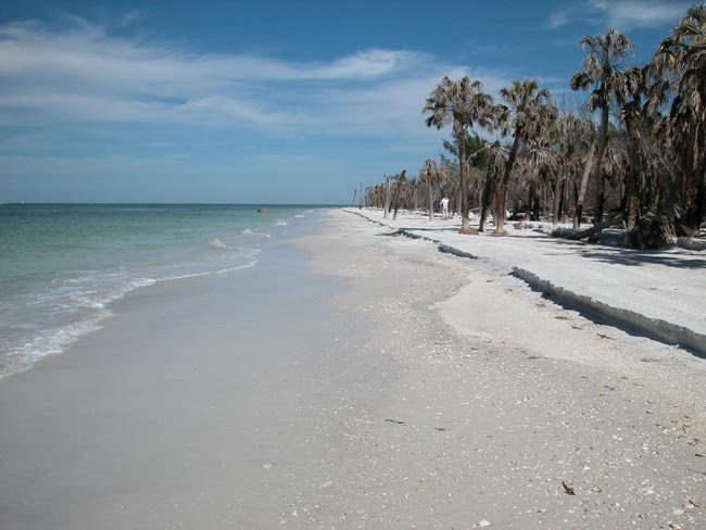 Best Places For Sand Dollars In Anna Maria Island