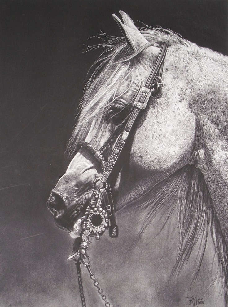 400 best Horse Drawing...