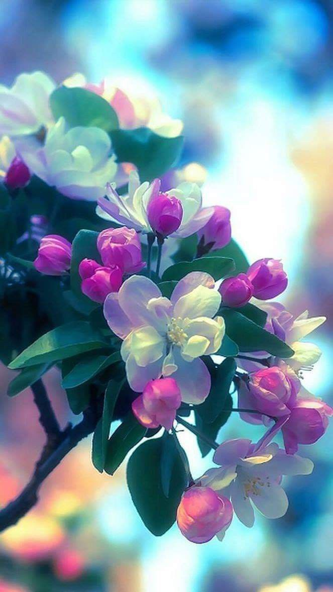 Pin By Chlakshman On Beautiful Pictures Flower Background Wallpaper Nature Iphone Wallpaper Flower Backgrounds