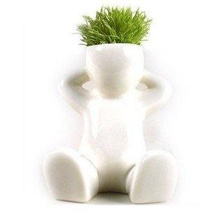 Grass HairMinis Plants, Gardenplantsliv Beautiful, Man Plants, Plants Bonsai, Hair Man, Gift Plants, Plants Hair, Bonsai Grass, Grass Plants