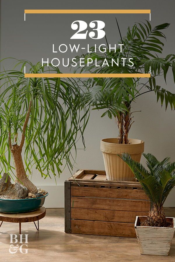 23 Of Our Favorite Low Light Houseplants Houseplants Low Light Low Light Plants Popular House Plants