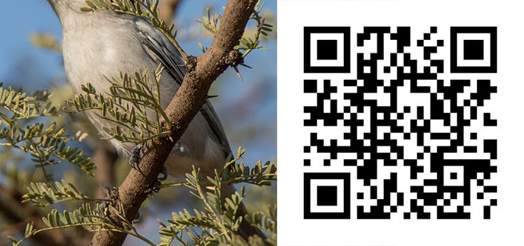 Guess the Bird 41 http://birdwatcher.co.za/guess-the-bird-41/