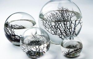 EcoSphere - Selfcontained Aquatic Ecosystem - Pure Modern Design Lifestyle Objects I