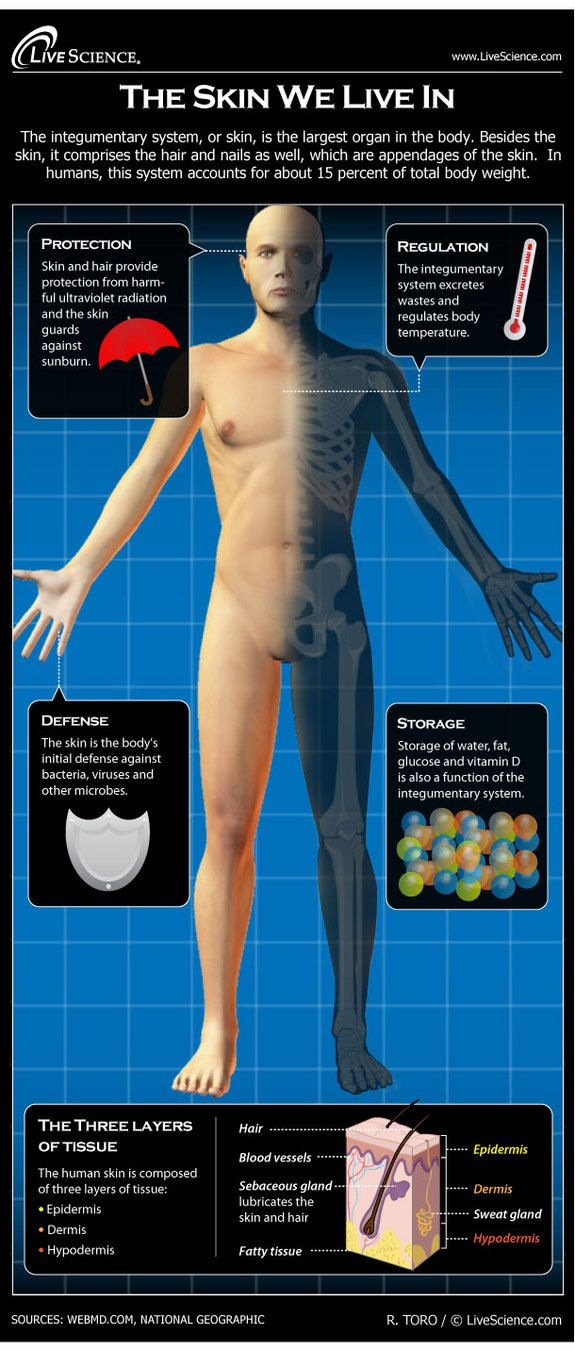 Infographic: The layers and functions of the human skin.