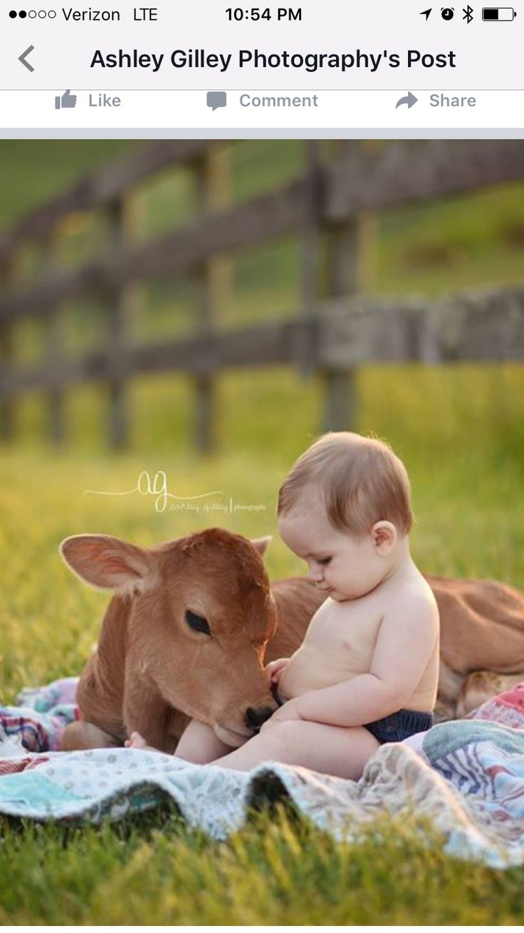 best touching photos images on pinterest pets adorable