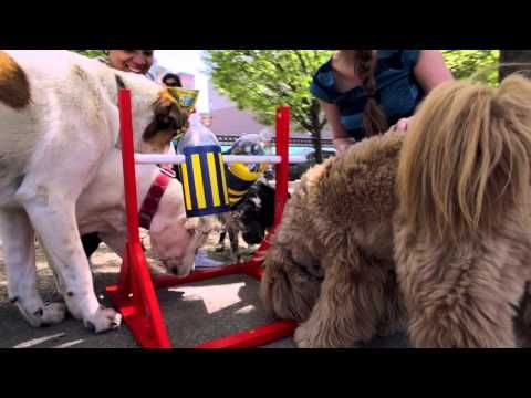 Pinterest brings Pins to life at Boston dog park - YouTube