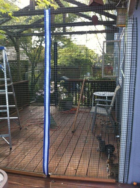 Quick Pic Of The New Diy Cat Enclosure I Enclosed The