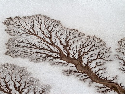 Tree-like shapes formed by rivers in Baja California desert, Mexico. Photo: Adriana Franco