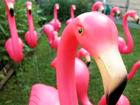 Pink Flamingos: Creator of iconic lawn ornament has passed away | Dangerous Minds