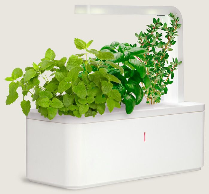 Indoor Herb Trough Part - 34: Click U0026 Grow - Grow Flowers And Kitchen Herbs Easily With A Smart Garden.  Technology