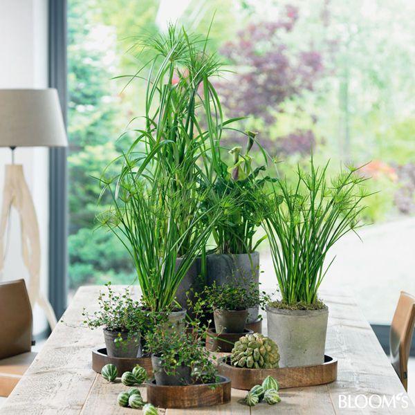 Grünpflanzen Green Plants Zimmerpflanzen: Zimmerpflanzen Auf Kleinen Holztabletts