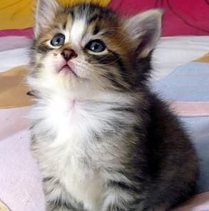 Cosa significa sognare un gatto?