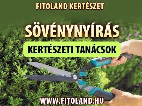 Sövénynyírás 1. - Sövények nyírása kézzel vagy géppel