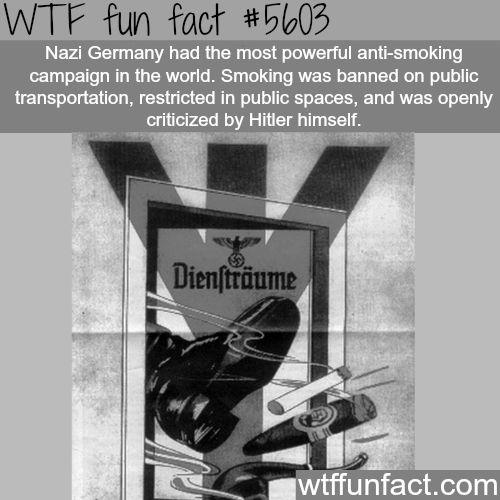 wtf-fun-factss