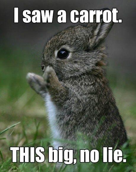 Hilarious images of the week, 35 images. I Saw A Carrot THIS Big, No Lie