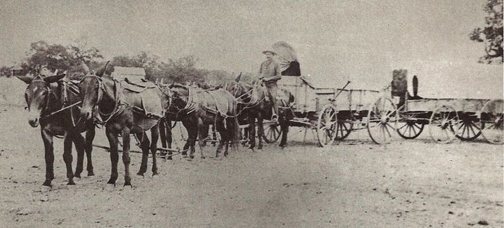 """A pair of wagons such as these hauling cotton might take as long as a week to travel from Fredericksburg to San Antonio. San Antonio, Fredericksburg and Northern Railroad. By Hugh Hemphill, author of """"San Antonio On Wheels"""" and """"The Railroads of San Antonio and South Central Texas."""" Courtesy: The Texas Transportation Museum, San Antonio, Texas (USA)"""