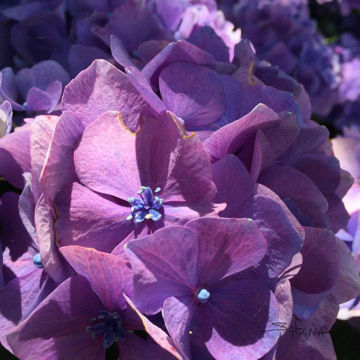 #colourinspiration #photography   Mother Nature's colour wheel..  by sabinadantonio