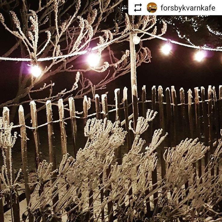 #Repost @forsbykvarnkafe with @instatoolsapp  Frost  #frosty