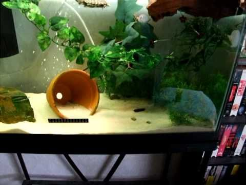 Squirt The Red Ear Slider Turtle - Tank Set-Up - YouTube