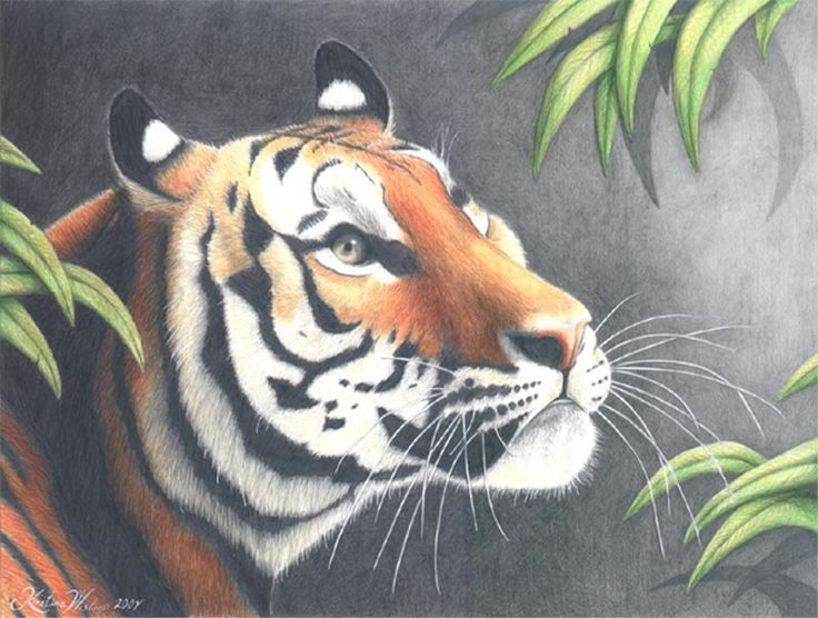 Tiger made whit pencel