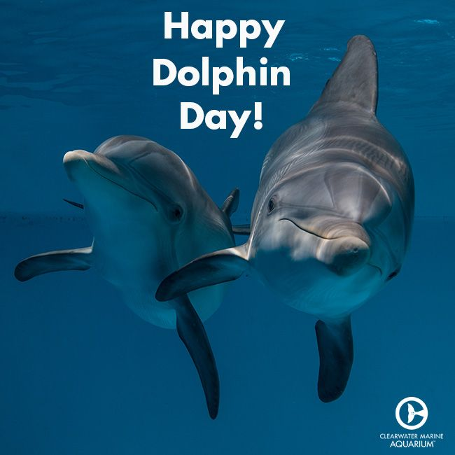 230 best Dolphin Tale images on Pinterest   Dolphin tale, Marine ...