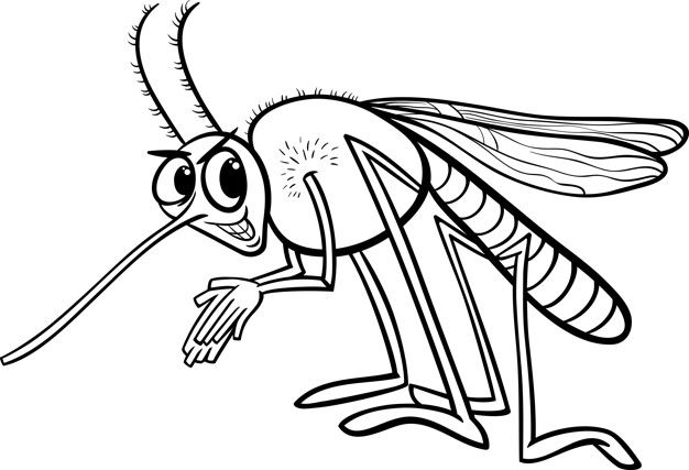 Mosquito Inseto Colorir Pagina Insect Coloring Pages Black
