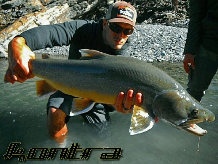 A truly amazing bull trout caught by KONTRA Team member Wes  #kontra_apparel #flyfishing #fishing #outdoors #camping #hiking #simmsfishing #waterworkslamson #loonoutdoors #yyc #Calgary