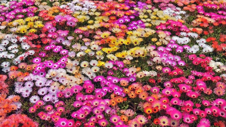 Nature Flowers Garden Petals Colors Abstract Plants HD Resolution