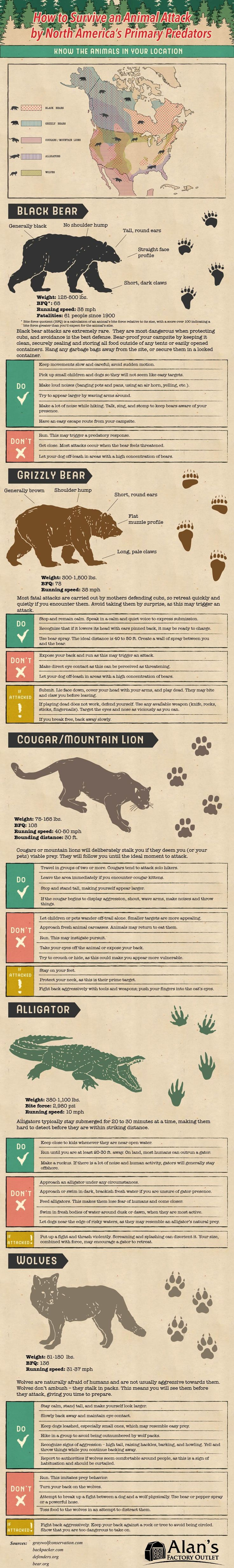 How To Face An Animal Attack In North America - Infographic