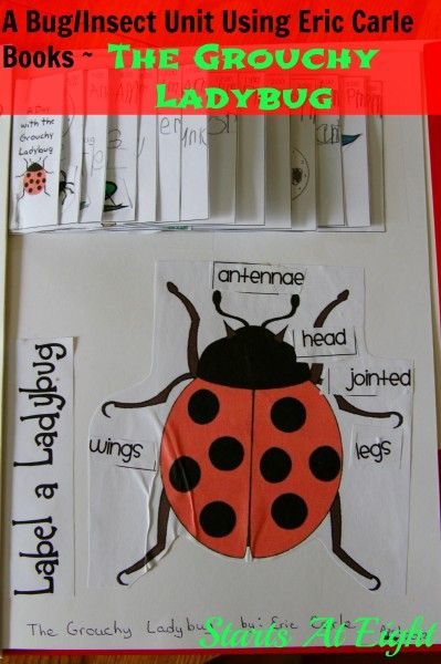 A Bug Insect Unit Using Eric Carle Books ~ The Grouchy Ladybug