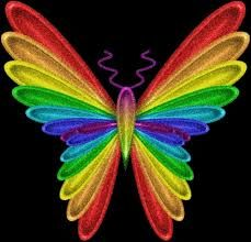 colorful butterfly!