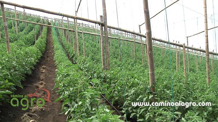 Polietileno politiv polietileno inteligente para for Construccion de viveros e invernaderos