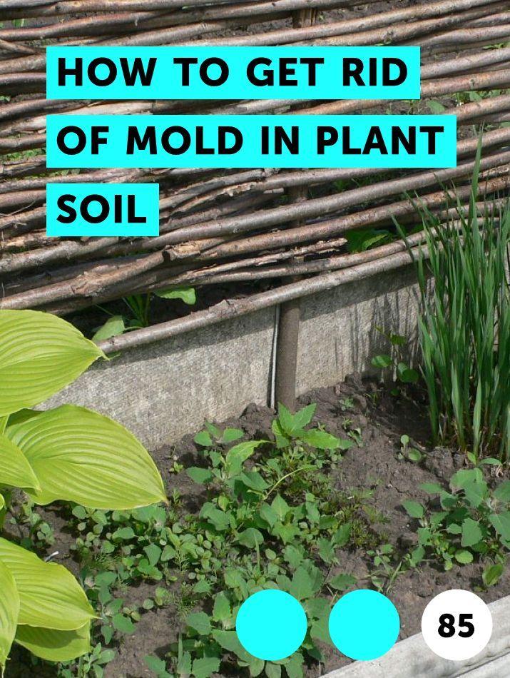 b58eac890c51cda7c51e0b77c8048fa1 - How To Get Rid Of Mildew In Garden Soil