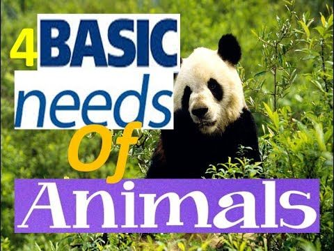 4 Basic Needs of Living Things -Animation Video for Kids