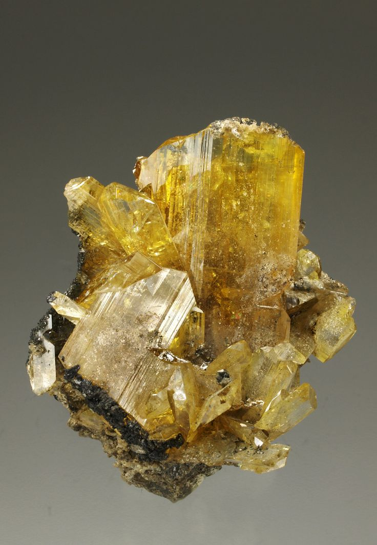 ANGLESITE WITH GALENA Puit IX , Touissit , Oujda-Angad , Oriental Region , Morocco  Excellent example of anglesita presented on a matrix with galena and showing a large group of crystals forms lanceolate, striated, characteristic of the species, very sharp and with good transparency, uniform yellow color.