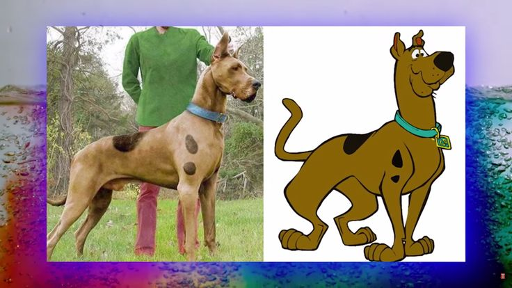 10 Amazing Photos Of Cartoon Animals In Their Real-Life Version. How cool!!!