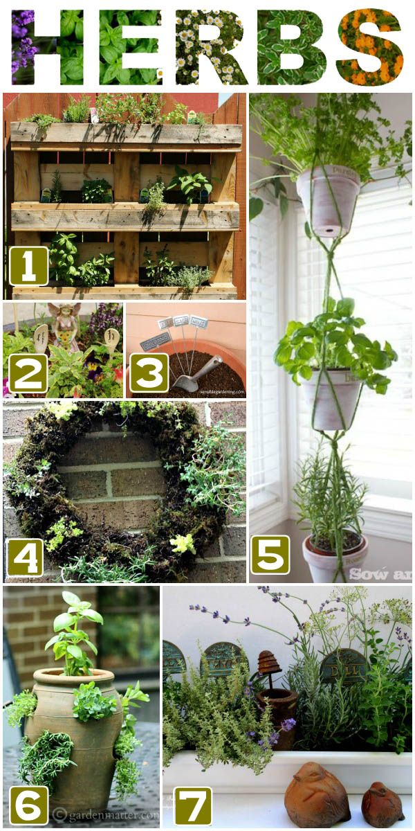 There are many benefits to growing herbs