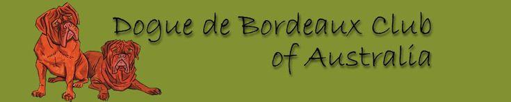 Dogue de Bordeaux Club of Australia